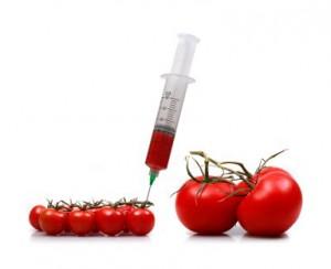 Геномодифицированные помидоры