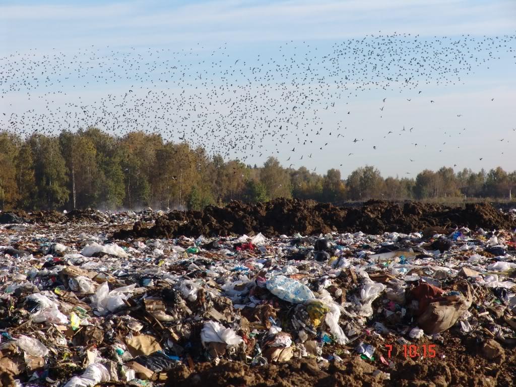 Современные проблемы утилизации отходов: сохраним жизнь планете